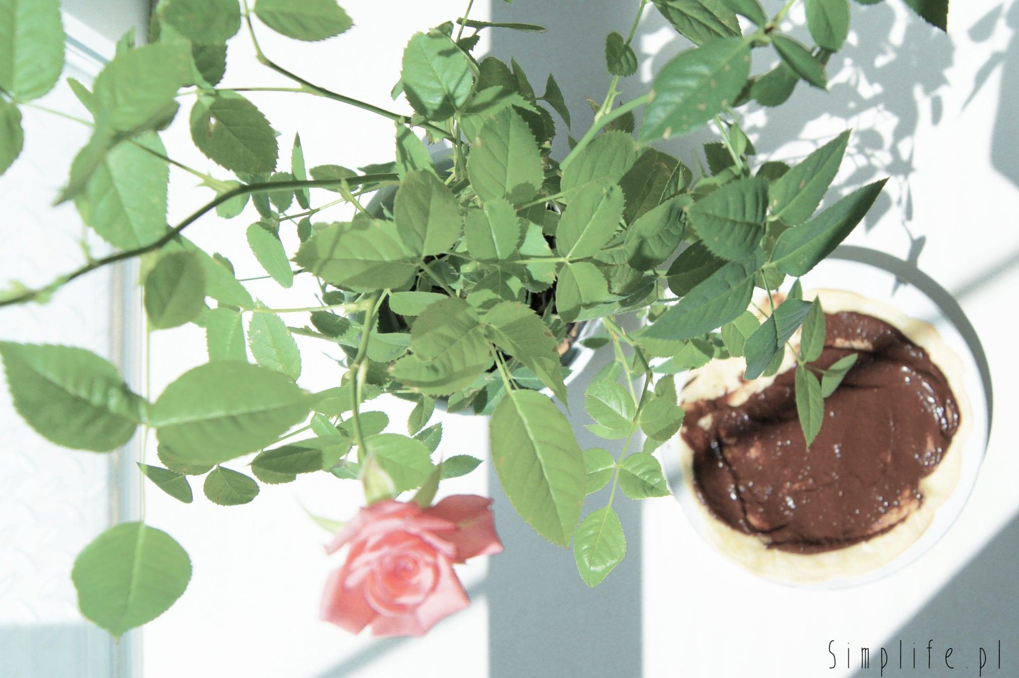 krem czekoladowy z awokado