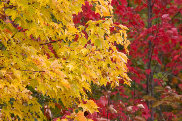 15 rzeczy, które musisz zrobić jesienią.
