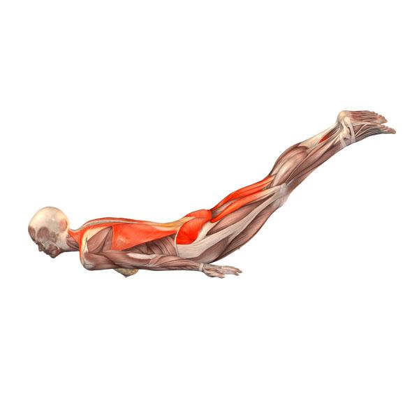 Pozycja świerszcza joga