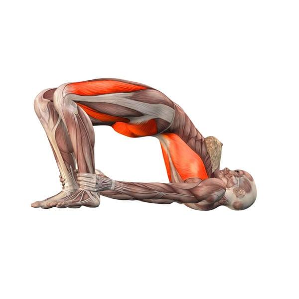 pozycja budowania mostu yoga