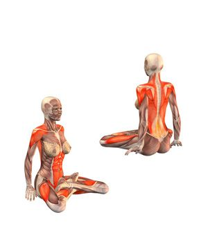 pozycja lotosu mięśnie