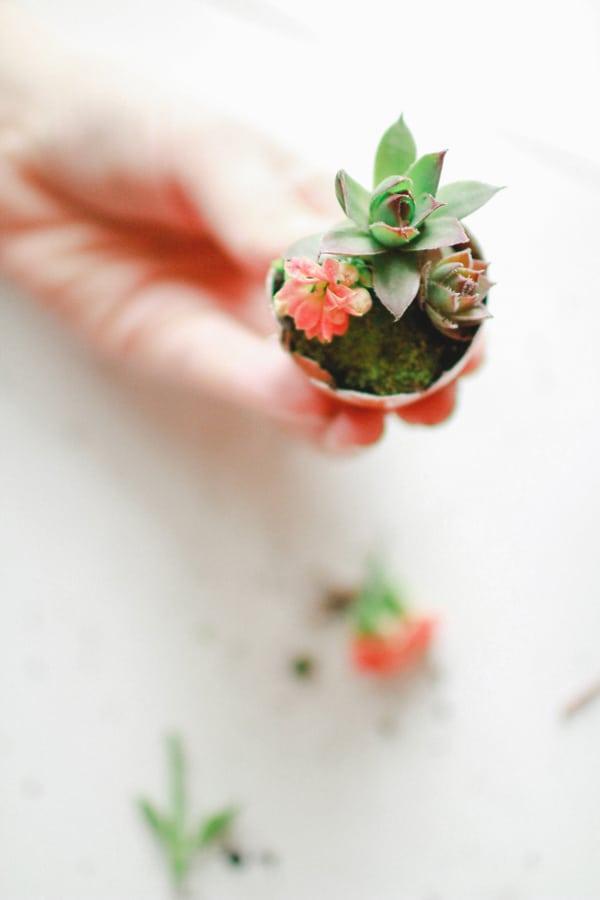 kwiaty w skorupkach diy wielkanoc