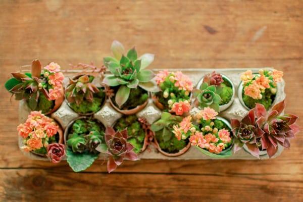 kwiaty wielkanoc