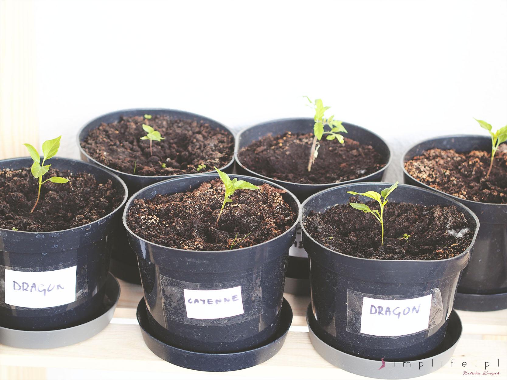 rośliny balkon