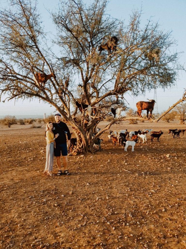 kozy na drzewie maroko