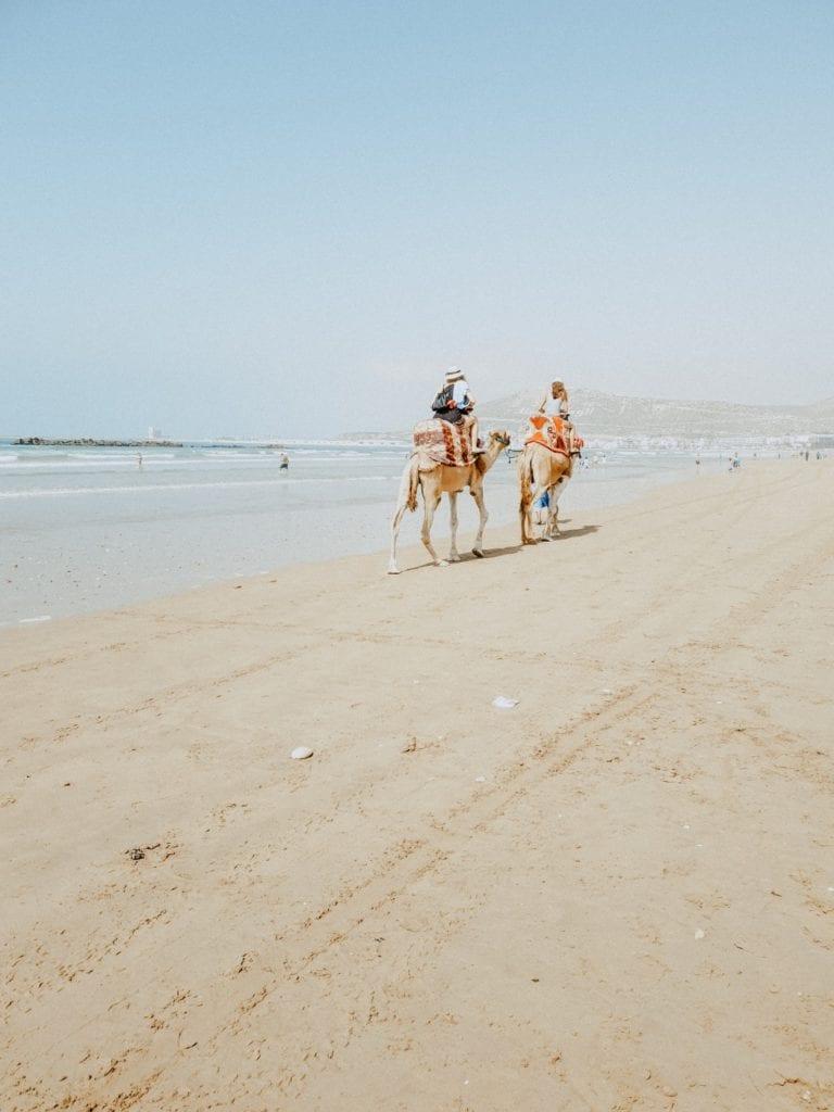 maroko wielbłądy
