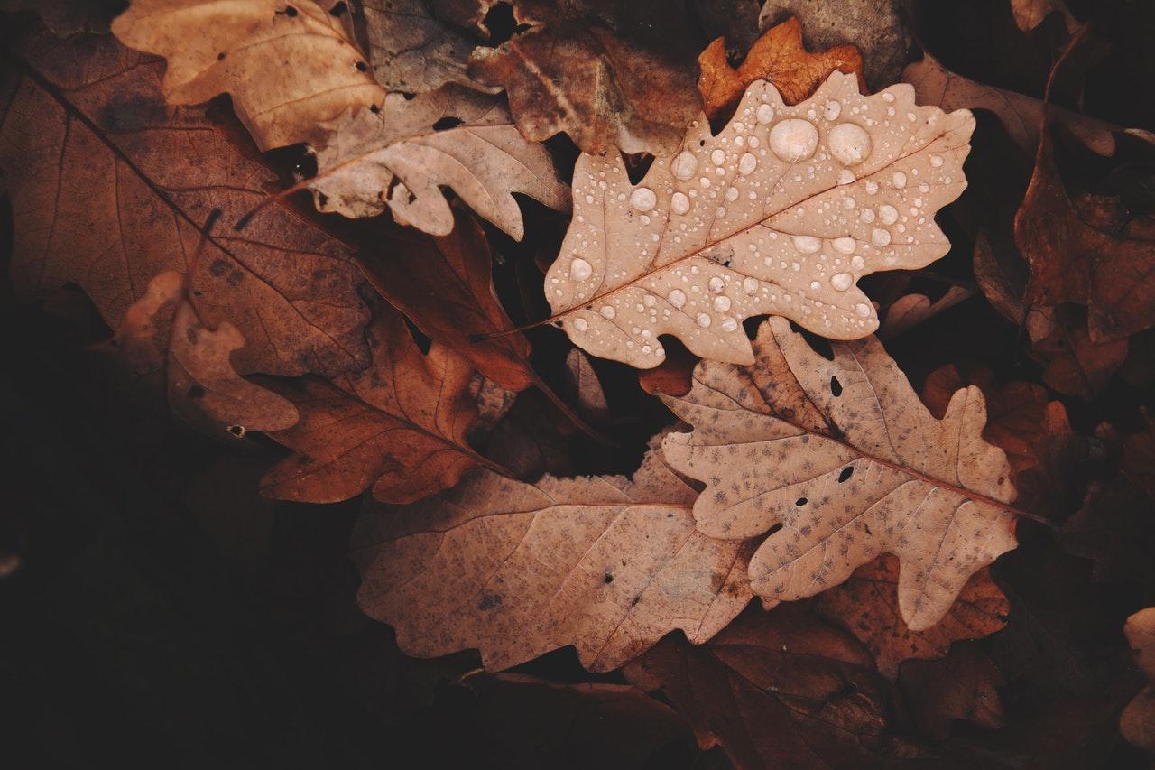 ajurweda na jesień rutyna